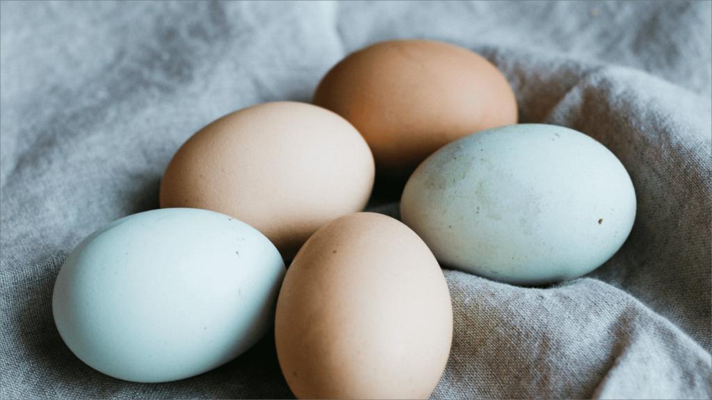 8.【おまけ1】赤卵と白卵の違い
